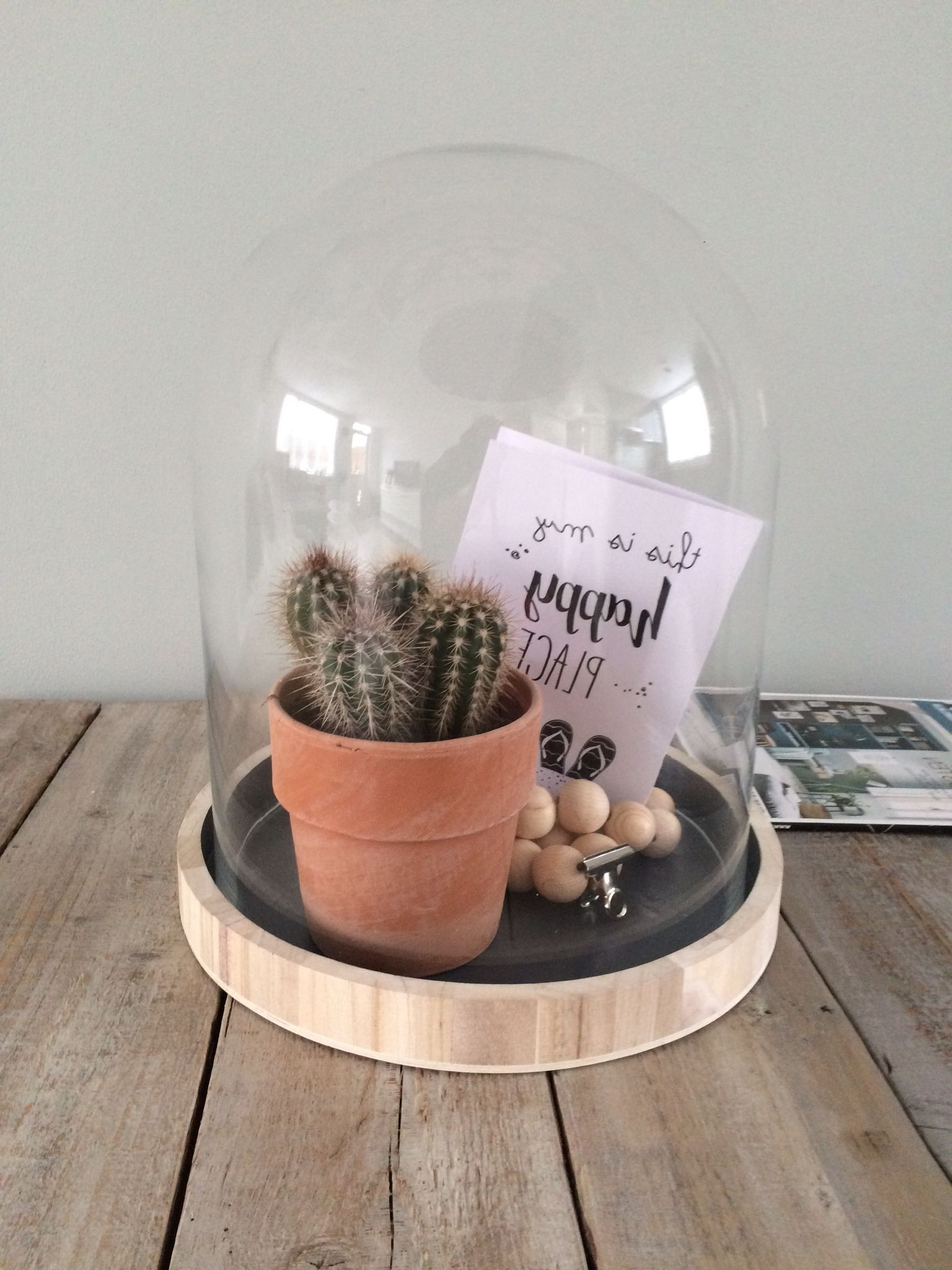 Cacti, Decoration (View 18 of 20)