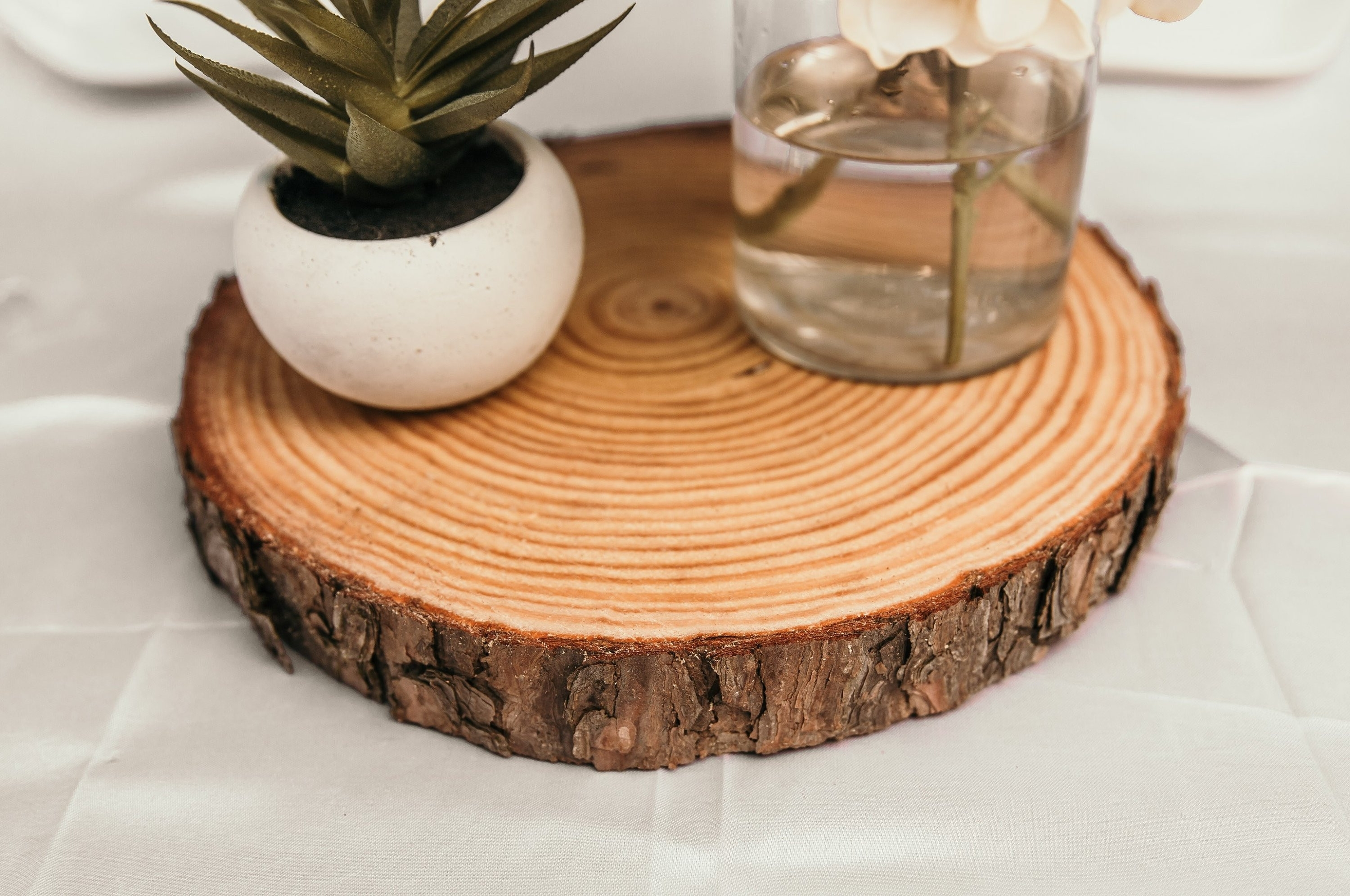 Tree Trunk Coffee Table New 1 5 Thick Wood Slices Wood Slices For Throughout Well Known Sliced Trunk Coffee Tables (View 18 of 20)
